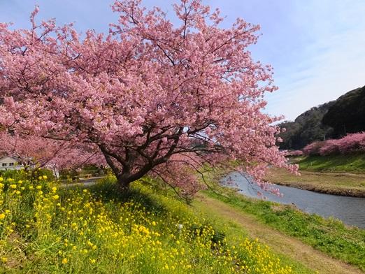 【伊豆】下賀茂温泉の宿