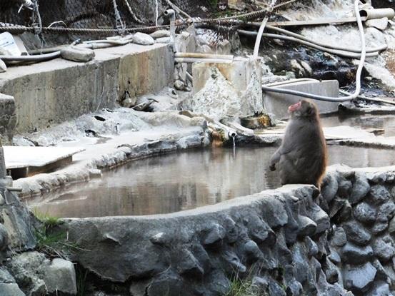【長野】地獄谷温泉 後楽館